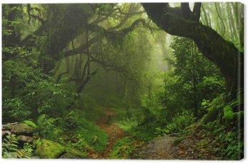 Tableau sur Toile Forêt de la jungle népalaise