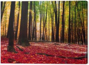Tableau sur Toile Forêt en automne avec la lumière d'or