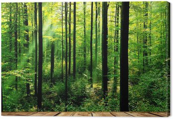 Tableau sur Toile Forêt verte avec des rayons de soleil et le plancher en bois