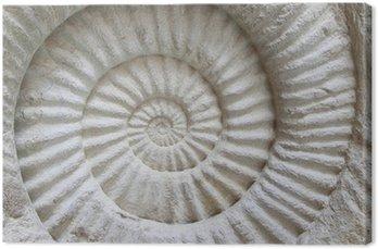Tableau sur Toile Fossile préhistorique ammonite sur la surface