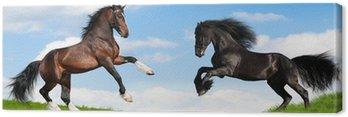 Tableau sur Toile Frison noir et laurier chevaux Clydesdale dans le champ.