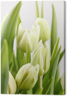 Tableau sur Toile Green tulips
