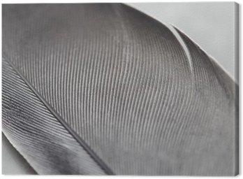 Tableau sur Toile Gros plan d'une plume