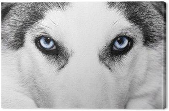 Tableau sur Toile Gros plan de chien husky