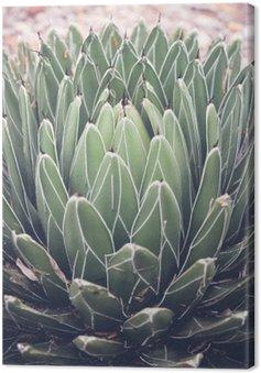 Tableau sur Toile Gros plan de l'agave plante succulente, mise au point sélective, tonifiant