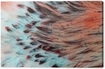 Tableau sur Toile Groupe de plumes marron brillant d'un oiseau