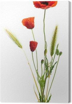 Tableau sur Toile Image d'un coquelicot sur un fond blanc, bouquet champêtre