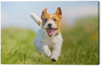 Tableau sur Toile Jack Russell Terrier chien