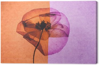 Tableau sur Toile Jolie fleur
