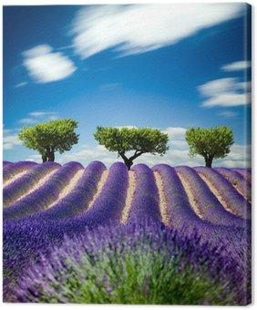 Tableau sur Toile Lavande Provence France / champ de lavande en Provence, France