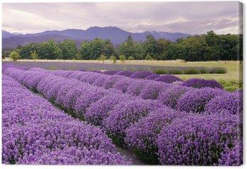 Tableau sur Toile Lavender Farm à Sequim, Washington, USA