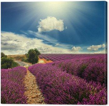 Tableau sur Toile Lavender field