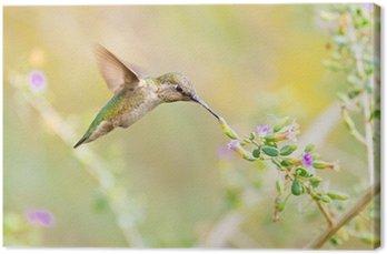 Tableau sur Toile Le colibri d'Anna alimentation sur Sage Fleurs. Arizona