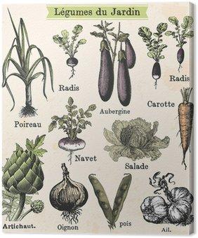 Tableau sur Toile Légumes du jardin