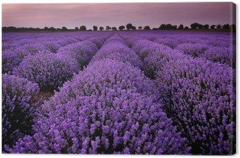 Tableau sur Toile Les champs de lavande au coucher du soleil