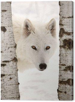 Tableau sur Toile Loup arctique observée entre deux arbres en hiver