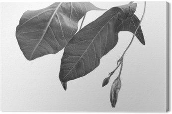 Tableau sur Toile Macrograph noir et blanc de l'objet de la plante avec la profondeur de champ