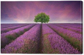 Tableau sur Toile Magnifique coucher de soleil d'été de lavande champ paysage avec un seul arbre