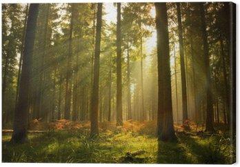 Tableau sur Toile Magnifique forêt