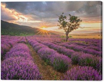 Tableau sur Toile Magnifique paysage avec un champ de lavande au lever du soleil