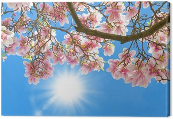 Tableau sur Toile Magnolia dans le soleil