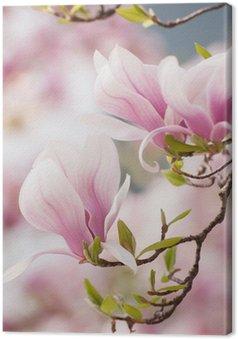 Tableau sur Toile Magnolia fleurs au printemps