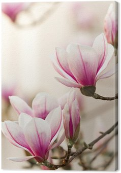 Tableau sur Toile Magnolia, Magnolia