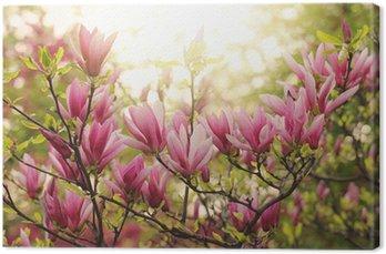 Tableau sur Toile Magnolia rose