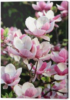Tableau sur Toile Magnolias en fleurs au printemps