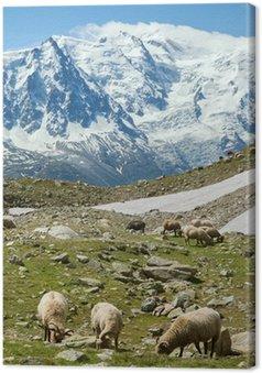Tableau sur Toile Moutons nourrissent de prairie alpine à l'époque de la lumière du soleil