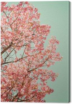 Tableau sur Toile Nature fond de la belle de cerisier fleur rose au printemps - filtre couleur pastel cru