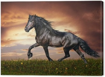 Tableau sur Toile Noir cheval frison au trot