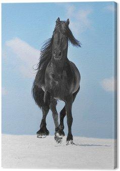 Tableau sur Toile Noir cheval frison court au trot sur la prairie en hiver