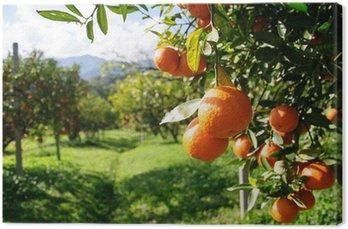Tableau sur Toile Oranger