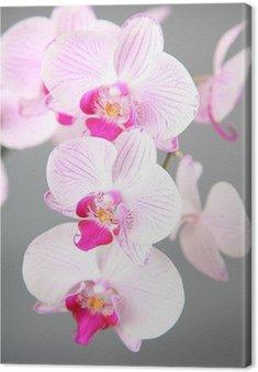 Tableau sur Toile Orchide rose
