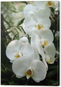Tableau sur Toile Orchidée blanche