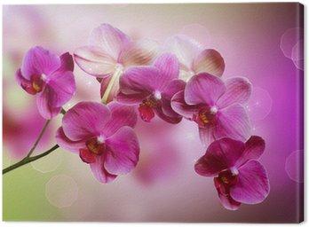 Tableau sur Toile Orchidée