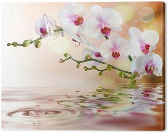 tableaux sur toile orchid e blanche pixers nous vivons pour changer. Black Bedroom Furniture Sets. Home Design Ideas