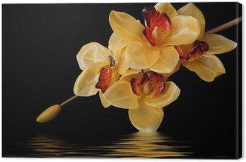 Tableau sur Toile Orchidees oranges