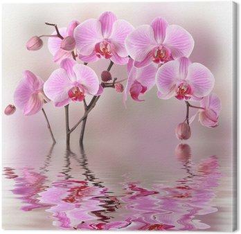 Tableau sur Toile Orchidées roses avec la réflexion de l'eau