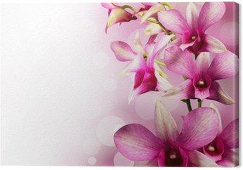 Tableau sur Toile Orchidées tropicales