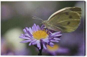 Tableau sur Toile Papillon d'alimentation sur une fleur violette