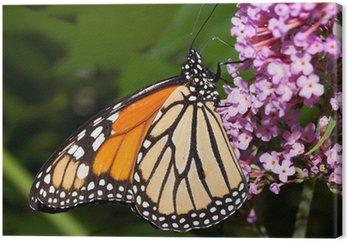 Tableau sur Toile Papillon monarque alimentation sur un buisson de papillon