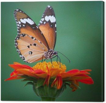 Tableau sur Toile Papillon sur une fleur