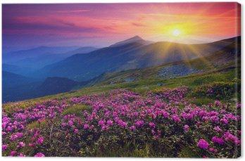 Tableau sur Toile Paysage de montagne avec des fleurs violettes