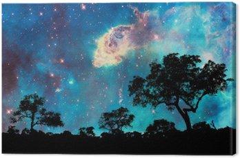 Tableau sur Toile Paysage de nuit avec la silhouette des arbres et nuit étoilée