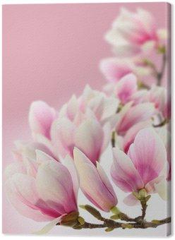 Tableau sur Toile Photo de magnolia