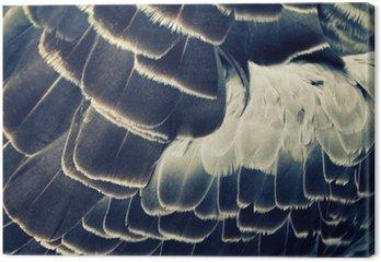 Tableau sur Toile Plumage de fond d'oiseau