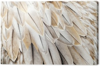 Tableau sur Toile Plumes d'oiseaux