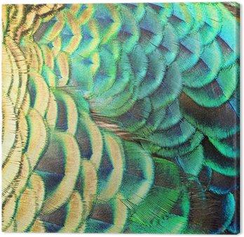 Tableau sur Toile Plumes de paon vert